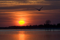 Shoreline with bird flying at sunset Royalty Free Stock Photos
