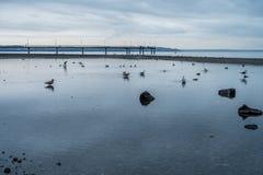 Shoreline Birds And Pier. A view of shoreline birds and the pier in Des Moines, Washington on an overcast day Stock Photo