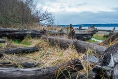 Shoreline and Blue Heron. A view of the shoreline and a Blue Heron on driftwood logs Stock Photo