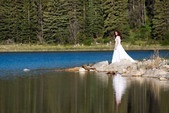Shoreline Bride Stock Images