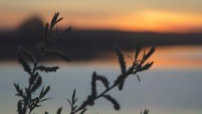 Shoreline de lac dans le coucher du soleil orange d'été, foyer sur l'usine pour banque de vidéos