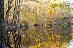 Shoreline degli alberi di riflessione del piccolo stagno nei colori di autunno in fotografia stock libera da diritti