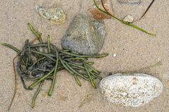Shoreline Detail of Seaweed Sand and Stones Stock Photography