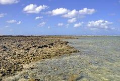 Shoreline för dam Elliot Island arkivfoto