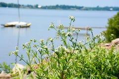 Shoreline flowers Stock Photos