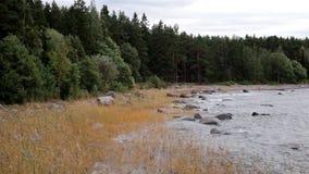 Shoreline full of grass stock video