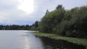 Shoreline il giorno nebbioso lungo il lago con i lilypads ed il litorale boscoso verde video d archivio