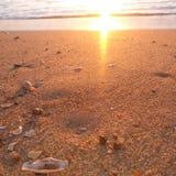 shoreline lizenzfreie stockfotos