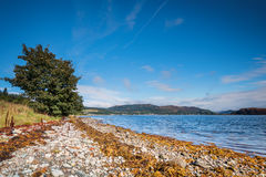 Shoreline on the Kyles of Bute Stock Images