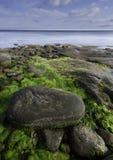 Shoreline längs den Northumberland straiten, Nova Scotia Arkivfoton