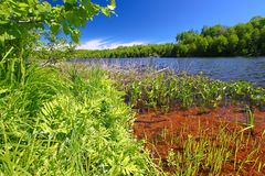 Little Horsehead Lake Landscape Wisconsin. Shoreline landscape at Little Horsehead Lake on a summer day in northwoods Wisconsin stock images
