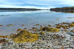 Shoreline at low tide on the coast of Maine Stock Photo