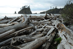 Shoreline of pacific coast. Hiking in shoreline of pacific coast in olympic national park, washington, usa Royalty Free Stock Photo