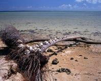 Shoreline, Pigeon Point, Tobago Stock Images