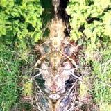 Shoreline Revelation. Driftwood in the bay Stock Images