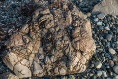 Shoreline Rock Macro. A closeup shot of a deeply etched rock on a shoreline at low tide Stock Photos