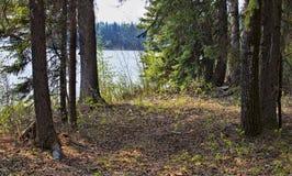 Shoreline in Saskatchewan Canada. Forest near the edge of a lake in northern Saskatchewan Canada Stock Photos