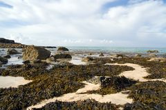 Shoreline with Seaweed. Coastal shoreline covered in seaweed Royalty Free Stock Photos