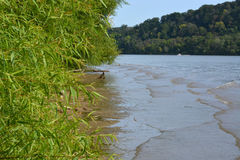 Shoreline. Of the Ohio river lined with greenery Royalty Free Stock Photography