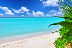 Shoreline of a tropical island in the Maldives Stock Images