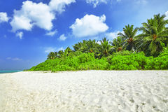 Shoreline of a tropical island in the Maldives Stock Photography