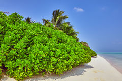 Shoreline of a tropical island Stock Images