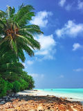 Shoreline of a tropical island Royalty Free Stock Image