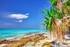 Shoreline of a tropical island Royalty Free Stock Images