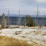 Shoreline at Yellowstone Royalty Free Stock Photos