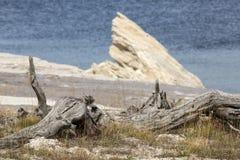 Shoreline of Yellowstone Lake with white rock outcrop, Wyoming. Stock Image