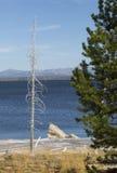 Shoreline of Yellowstone Lake with white rock outcrop, Wyoming. Royalty Free Stock Photo