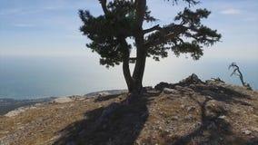 Shorelinen av den Yalta staden, sikt från berget skjutit härliga crimea som den placerar till ukraine Sikt på Yalta och den Black arkivbilder
