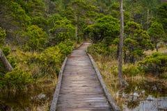 Shorepine沼泽TrailVancouver Isla 图库摄影