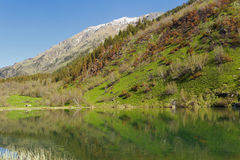 The shores of Trout lake in the Teberda reserve.Western Caucasus. Stock Images