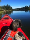 Shorkie сплавляться на озере паук, острове ванкувер, ДО РОЖДЕСТВА ХРИСТОВА Стоковая Фотография