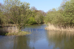 Shorne公园的湖 免版税库存照片