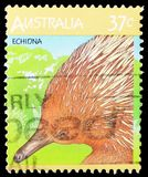 Short-beaked Echidna Tachyglossus aculeatus, Australian Wildlife serie, circa 1987. MOSCOW, RUSSIA - MARCH 23, 2019: A stamp printed in Australia shows Short royalty free stock image