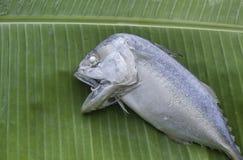 Short-bodied mackerel on Banana leaf. Short-bodied mackerel or Indo-Pacific mackerel on fresh Banana leaf Stock Photography