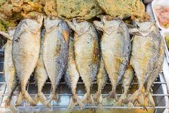 Short-bodied mackerel has omega-3 which good for nerve system. Stock Photography
