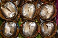 Short-bodied mackerel Royalty Free Stock Photo