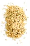 Short brown rice royalty free stock photos