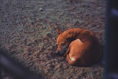 Short-coated Dog Sleeping on Soil Ground at Daytime Royalty Free Stock Photography