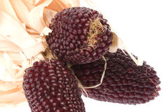Short Cobs of Indian Corn Royalty Free Stock Photos