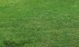 Short cut grass background Stock Photography