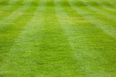 Short cut grass with visible stripes Stock Images