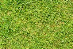 Short cut green grass background. Green grass field photo background. Spring banner of fresh green grass. Grass image for backdrop or seasonal card. Summer Royalty Free Stock Photo