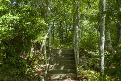 Stairs in woods. Short flight of old wooden stairs from beach to woods at the Lloyd Center stock photo