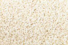 Short grains of uncooked white Kuban rice Royalty Free Stock Photography