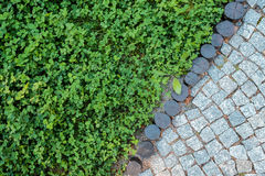 Short grass lawn and cobblestone pavement texture Stock Image