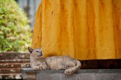 Short hair brown cute little sleeping cat looking up. With smile Stock Images